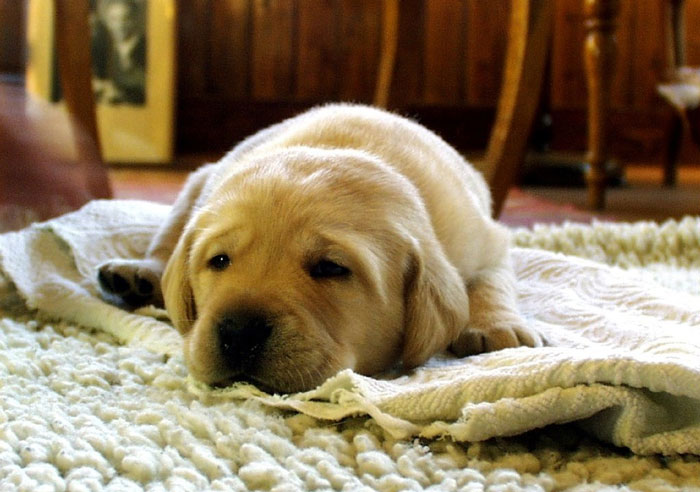 Cute puppy sleeping on carpet