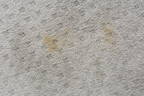 10 Carpet Cleaning Secrets From the Pros