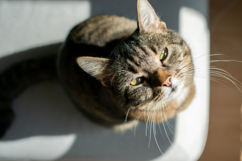 What to Do When Chloe the Cat Misses the Litter Box (Accidentally or Because She's Punishing You)